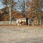 the horse (next to the house)