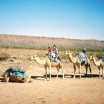 Frontier Camel Tours