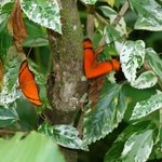 Butterfly Farm
