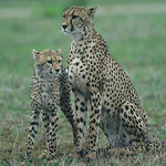 EuroZulu Guided Tours & Safaris Foto