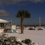 Palm Tree and Snow - Just isn't right