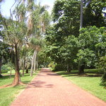 Path at Botanical Gardens