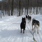 DOGSLEDDING ON TRAIL