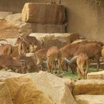 Riyadh Zoo