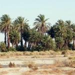 Foto van Palm Canyon Resort & RV Park