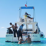 Cozumel Diving with Pro Dive Mexico!