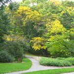 Arnold Arboretum
