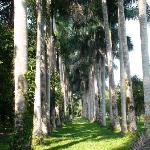 Palm Avenue (Botanical Garden)