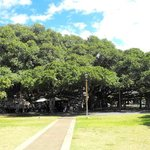 Banyan Tree Park near the Courthouse Building