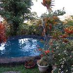 The Pool at Manoa Valley Inn