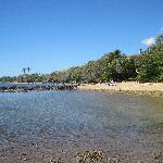 View from the fish pond at low tide looking back at the beach and cottage (hidden by the trees)