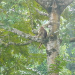 Tabin Wildlife Reserve