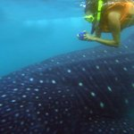 The whaleshark and I