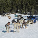 ‪Spirit of the North Sled Dog Adventures‬