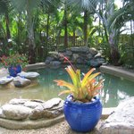 Tropical pool at Sea Change B&B