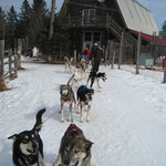 Eden Dogsledding