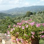  Garden at Villa Sangiovese
