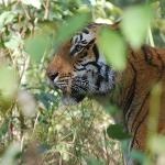 Tigers have been sighted near Riverine Lodge, so never get outof room at night.