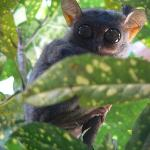 Philippine Tarsier and Wildlife Sanctuary Foto