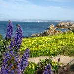  Yellow blooms in Pacific Grove walk path
