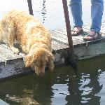 Louie trying to figure out where the fish went