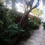 Another view of the garden.