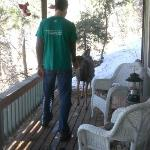  Feeding deer right on the balcony!