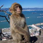 side trip to Gibraltar