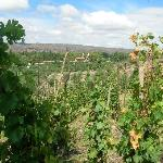 view at valle de lunlunta from domaine st. diego