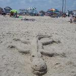 Point Pleasant Beach (Sand Alligator)