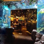 The fish tank archway