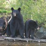  mama bear with her cubs