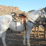 White Stallion Ranch resmi