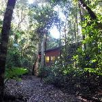 Foto di Springbrook Lyrebird Retreat