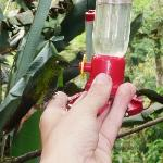 Some hummingbirds will even sit down on your finger if you are a bit pacient...
