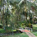  surrounding garden