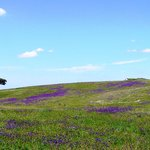 The Alentejo in the Spring