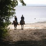 Horseback ride along the beach