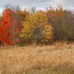 Fall colors in Perrot Park