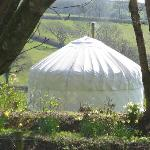 Botelet Lower Yurt
