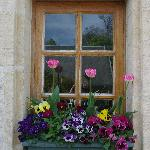 One of our room's window boxes