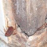 cockroach come out from hideout