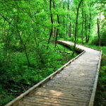 Boardwalk through the Park