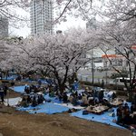 Hanami in Shiba-koèn, neighbourhood park