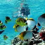  Snorkeling at its best!