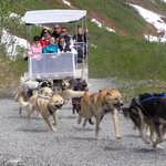 Gold Rush Dog Sled Tours