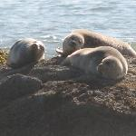  Resident Seals