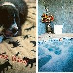 Pet Friendly rooms available