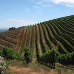 Cape Town Wine Tours