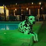 Marley relaxing by the pool.